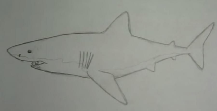 Учимся рисовать акулу - шаг 4