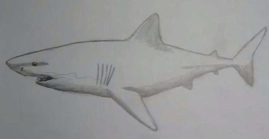 Учимся рисовать акулу - шаг 5