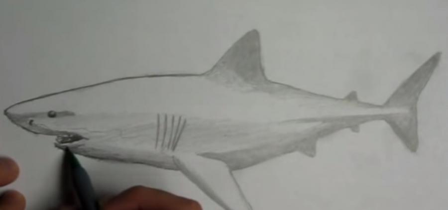 Учимся рисовать акулу - шаг 6