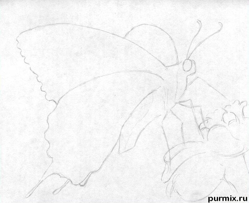 Рисуем бабочку на цветке карандашами - шаг 2