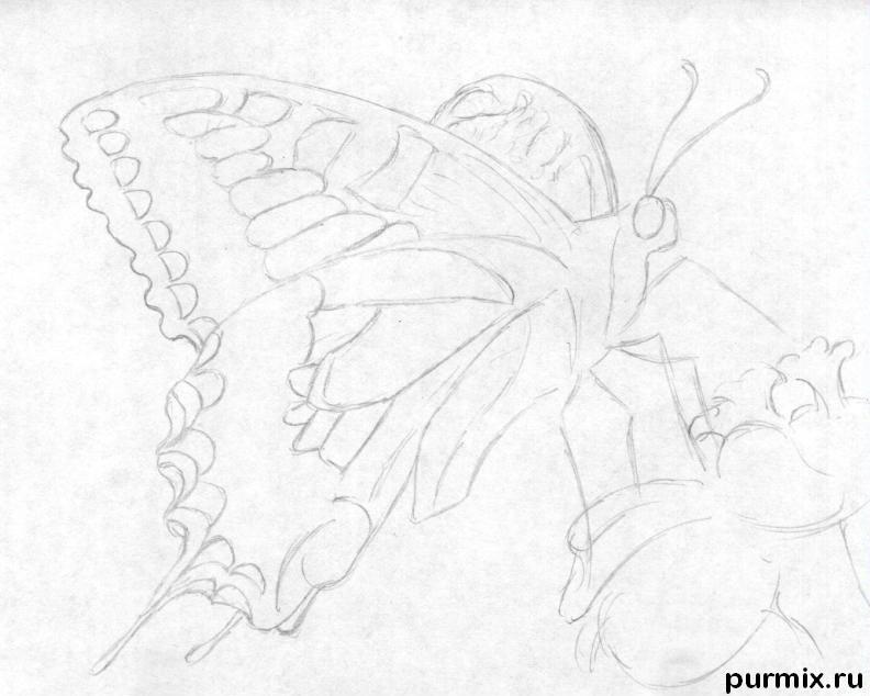 Рисуем бабочку на цветке карандашами - шаг 3