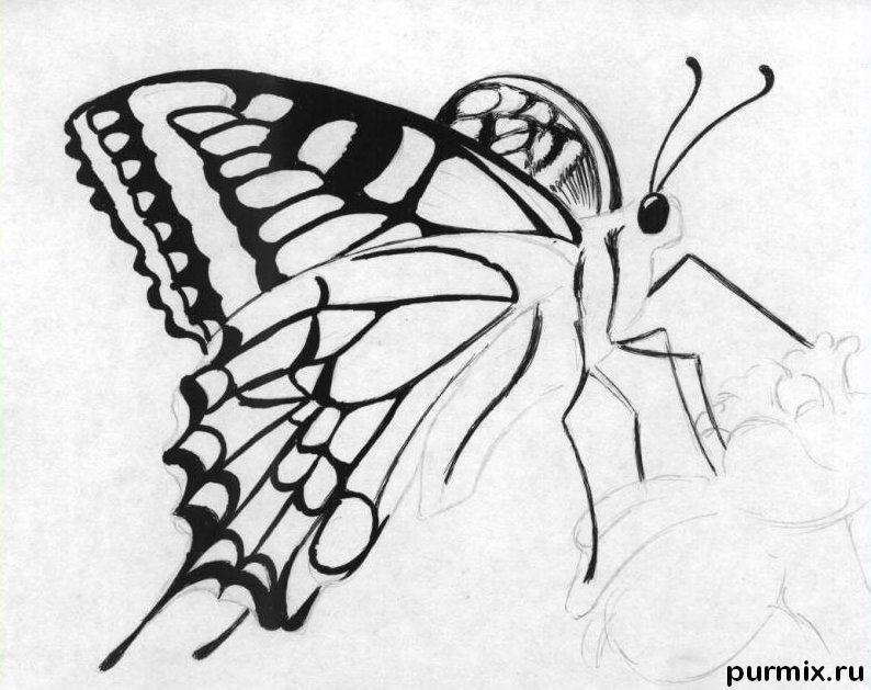 Рисуем бабочку на цветке карандашами - шаг 4