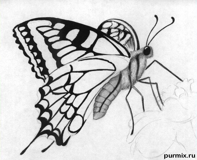 Рисуем бабочку на цветке карандашами - фото 5