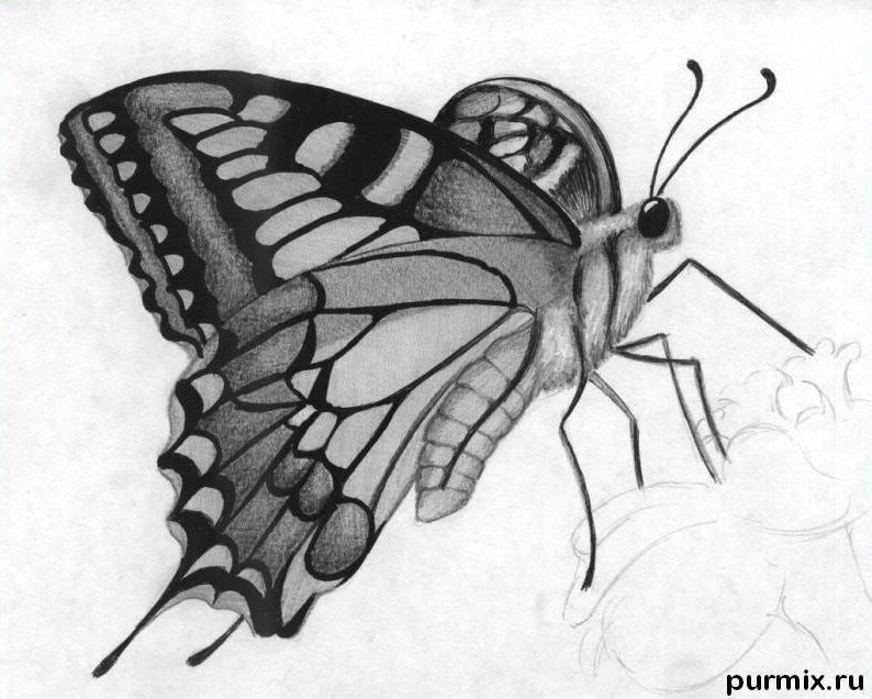 Рисуем бабочку на цветке карандашами - шаг 6