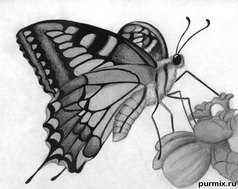 Как нарисовать бабочку на цветке карандашами поэтапно