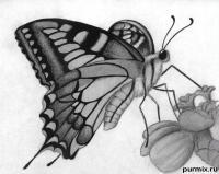 Фото бабочку на цветке карандашами