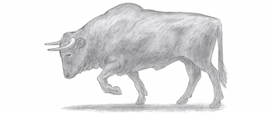 Рисуем быка - фото 6