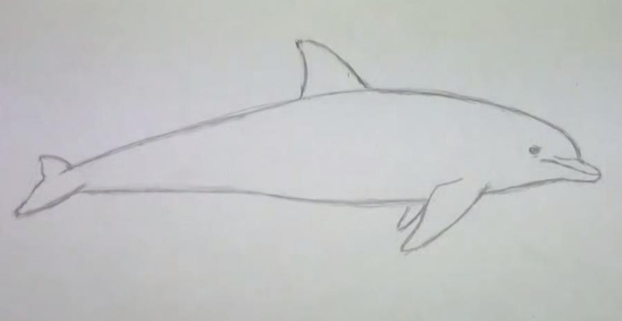 Рисуем дельфина  для начинающих - шаг 4