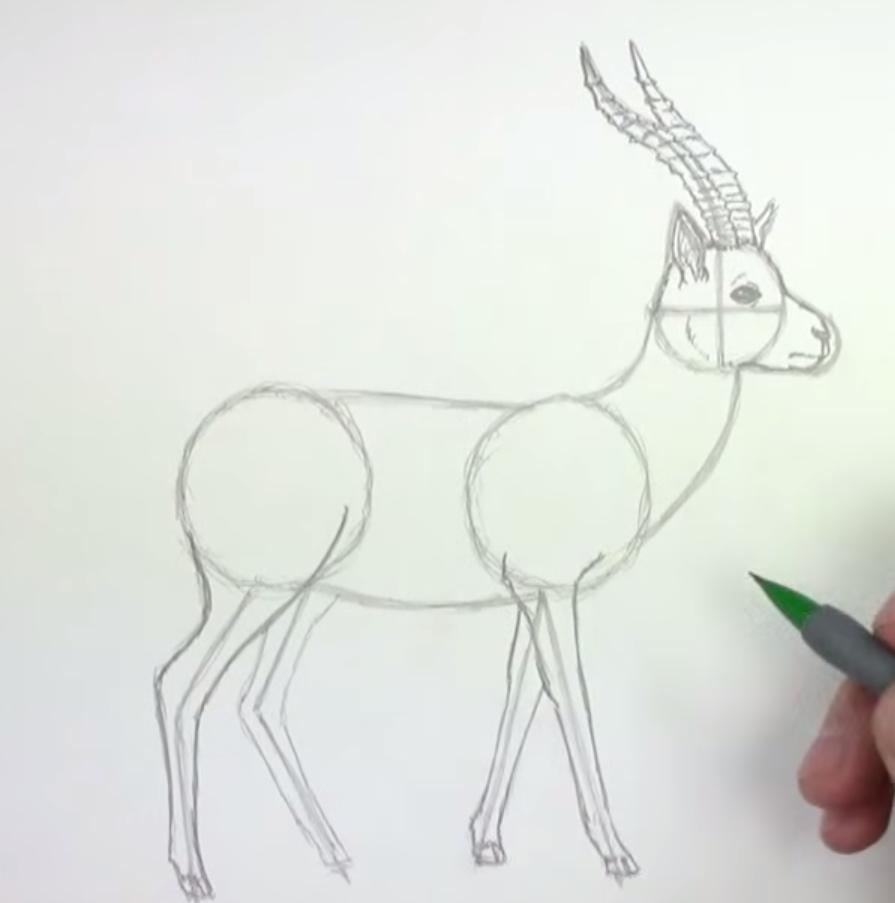 Как животное газель в полный рост - шаг 4