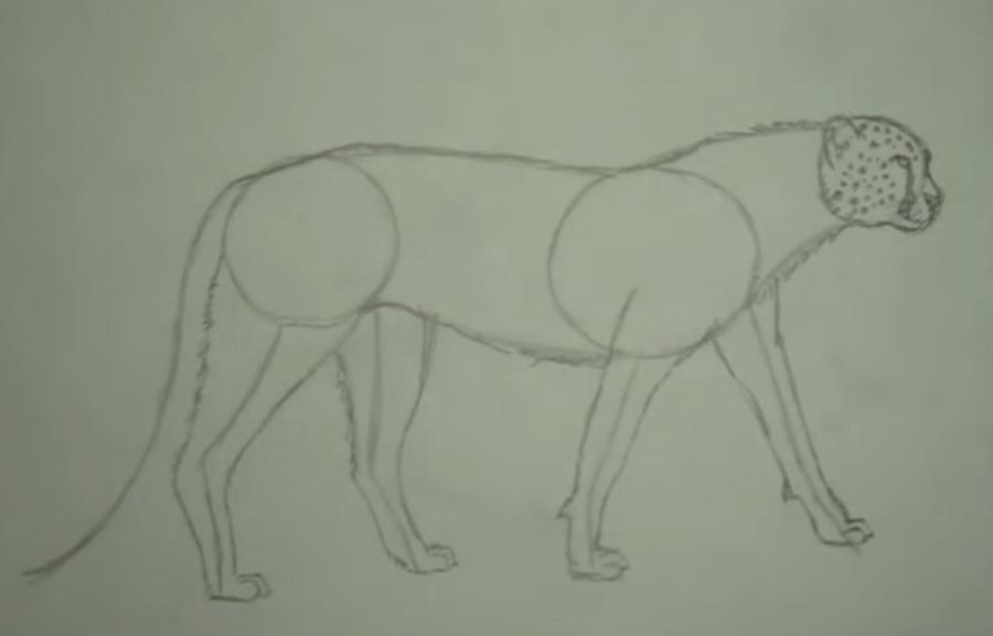 Как научиться рисовать гепарда простым карандашом