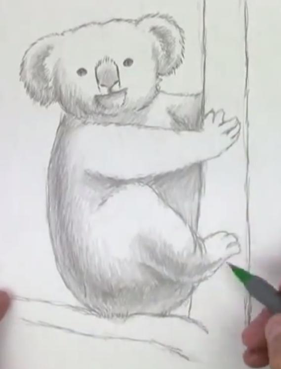 Рисуем коалу   для начинающих - шаг 4