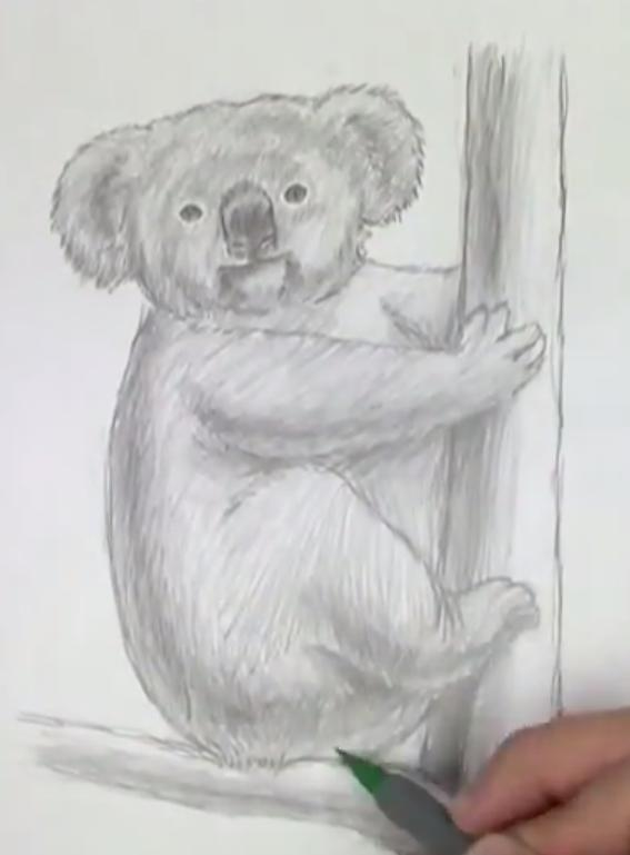 Рисуем коалу   для начинающих - шаг 5