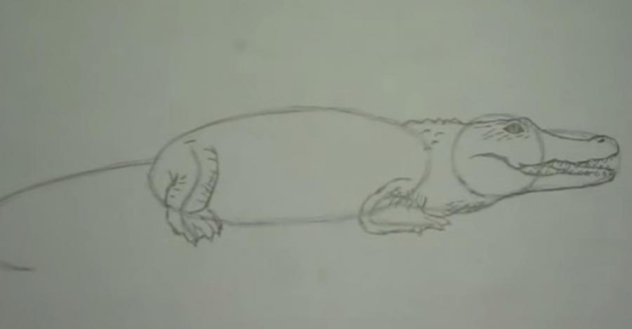 Рисуем крокодила - шаг 4