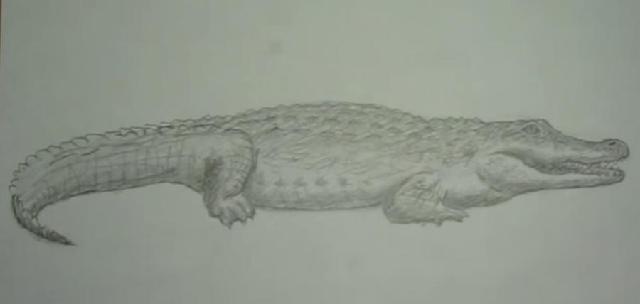 Рисуем крокодила - шаг 7
