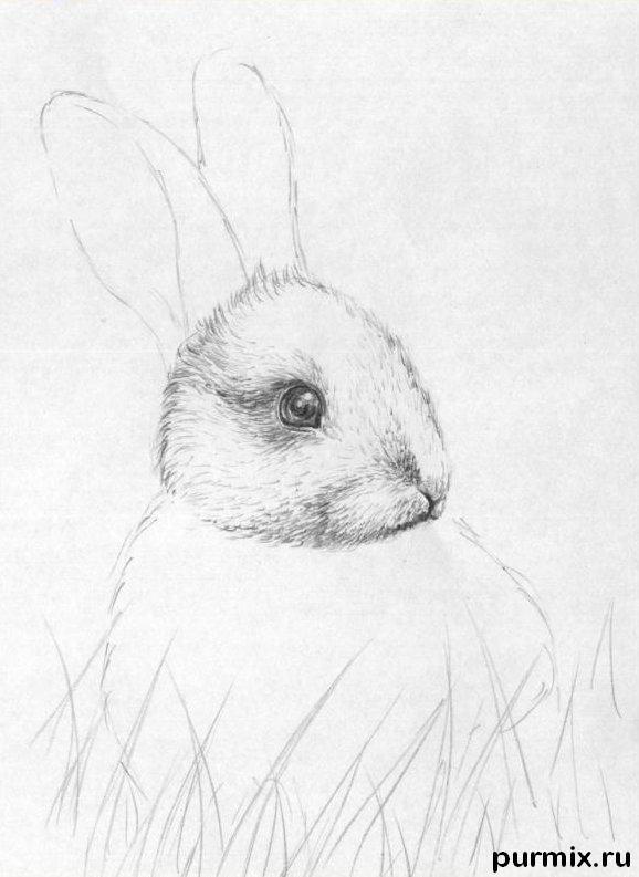 Рисуем кролика в траве - шаг 2
