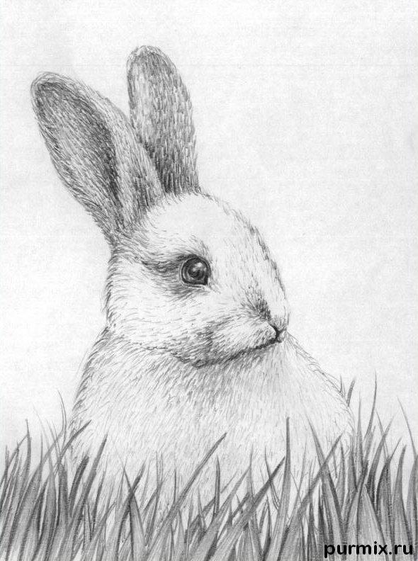 Рисуем кролика в траве - шаг 5
