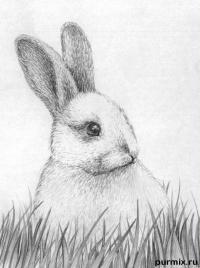 Как научиться рисовать кролика простым карандашом