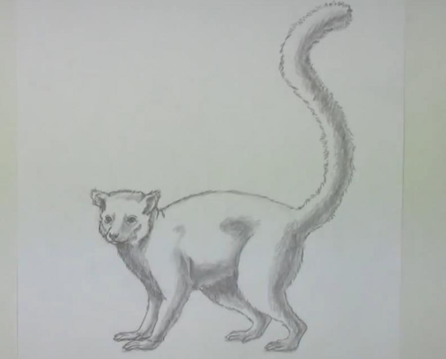 Рисуем лемура в полный рост - шаг 5