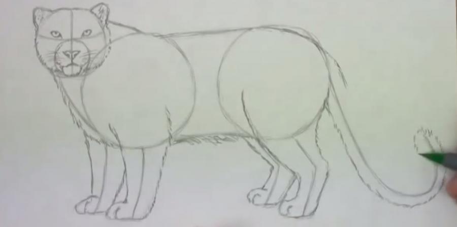 Рисуем леопарда - фото 4
