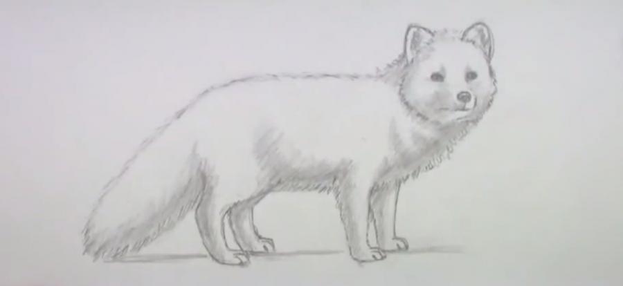 Как научиться рисовать лису простым