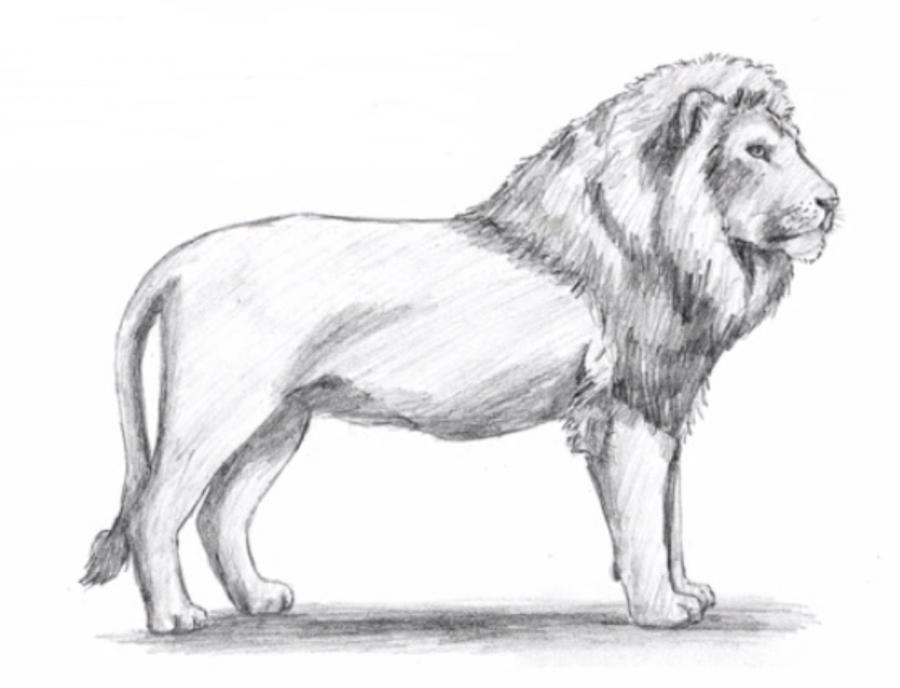 Рисуем льва в полный рост - фото 7