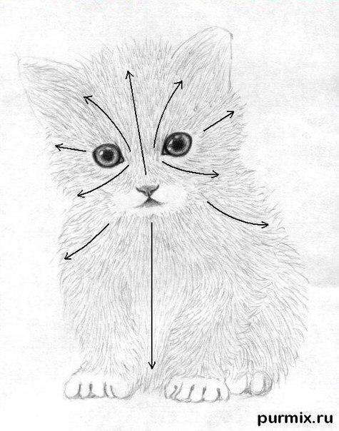 Как научиться рисовать маленького котенка простым