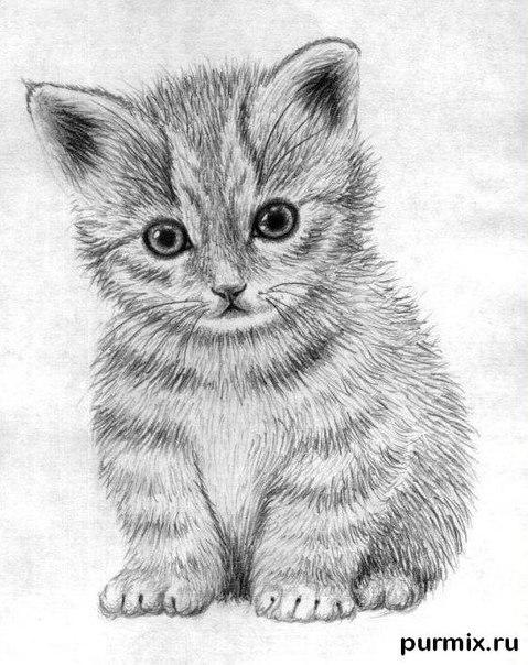 Рисуем маленького котенка простым - шаг 6