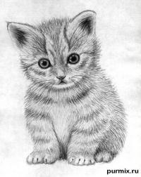 Как научиться рисовать маленького котенка простым карандашом