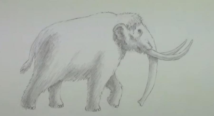 Как научиться рисовать мамонта простым