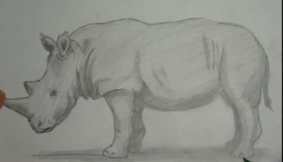 Рисуем носорога простым - шаг 7
