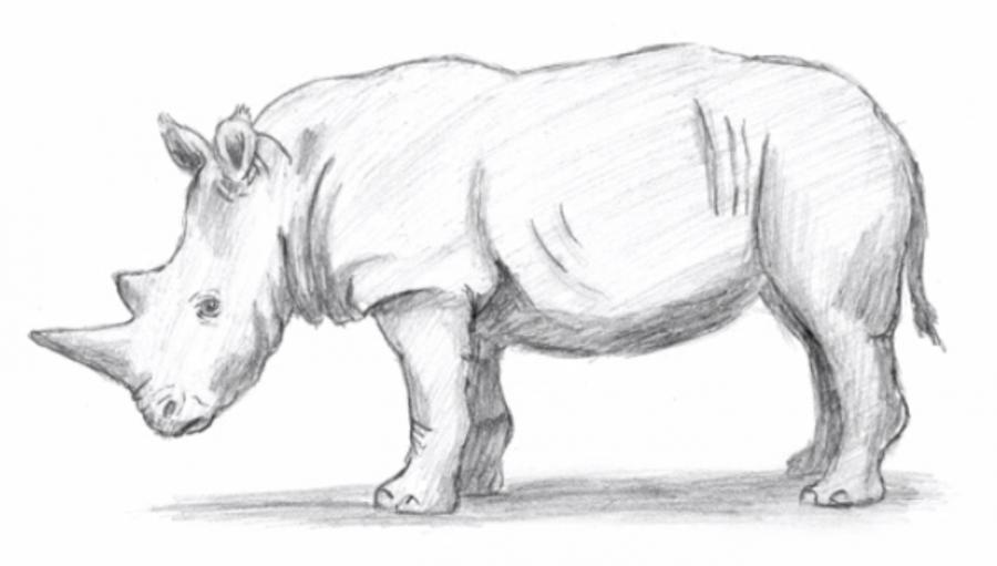 Рисуем носорога простым - шаг 8