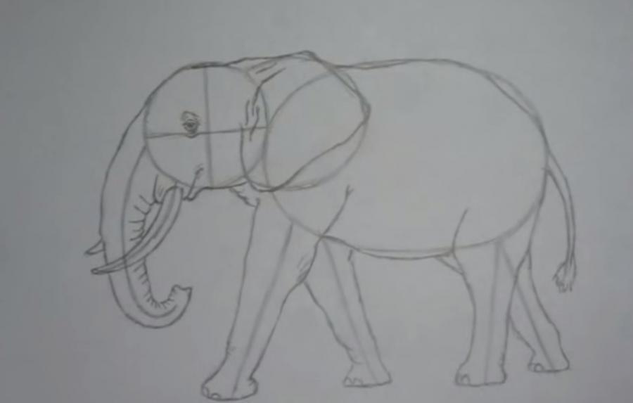 Как просто нарисовать слона - шаг 3