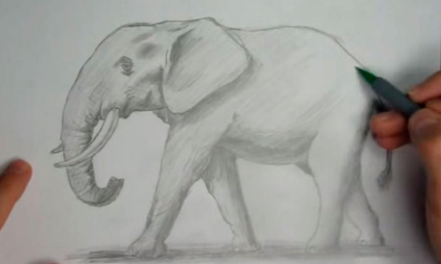 Как научиться рисовать слона простым