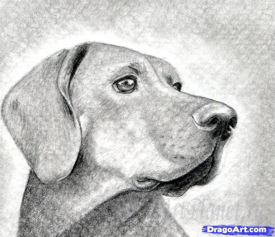 Как правильно нарисовать голову, морду собаки - шаг 11