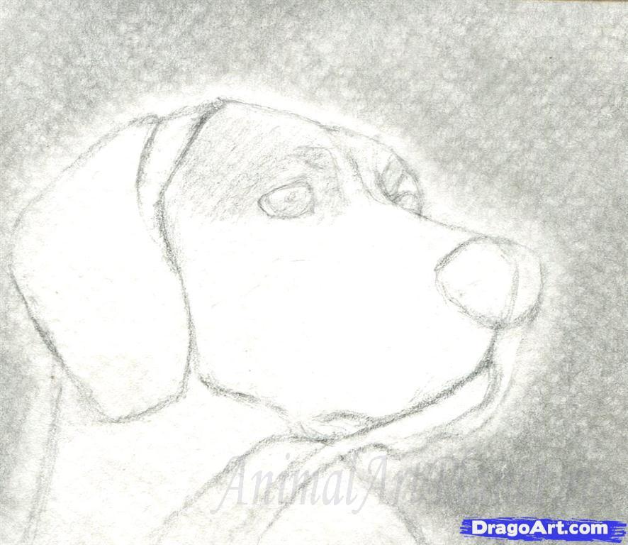 Как правильно нарисовать голову, морду собаки - шаг 3
