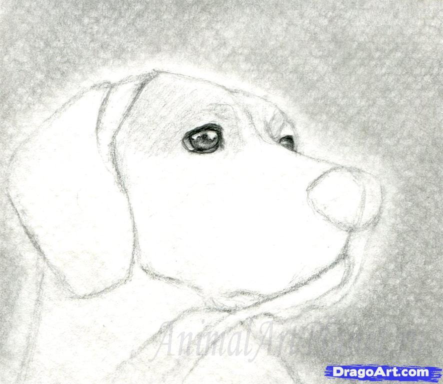 Как правильно нарисовать голову, морду собаки - шаг 4