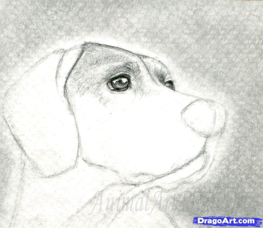 Как правильно нарисовать голову, морду собаки - шаг 5
