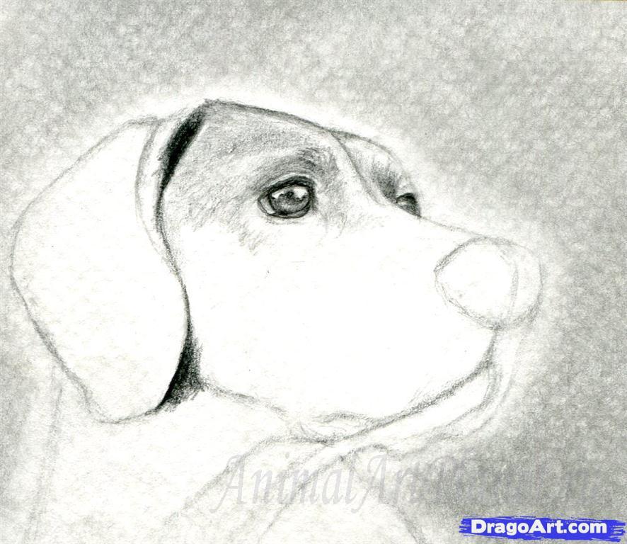 Как правильно нарисовать голову, морду собаки - шаг 6
