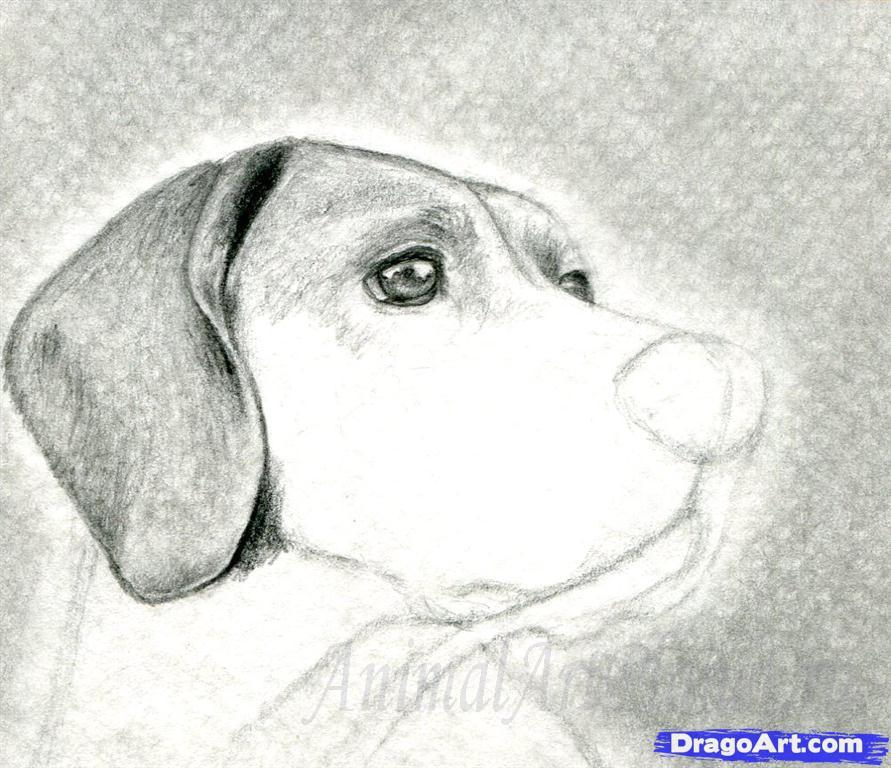 Как правильно нарисовать голову, морду собаки - шаг 7