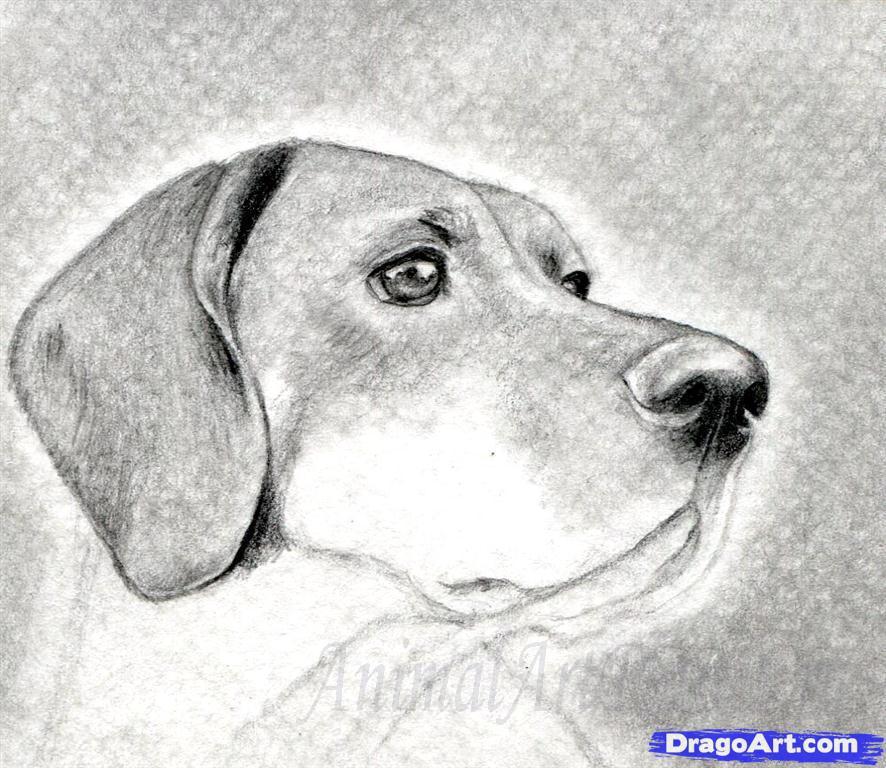 Как правильно нарисовать голову, морду собаки - шаг 8