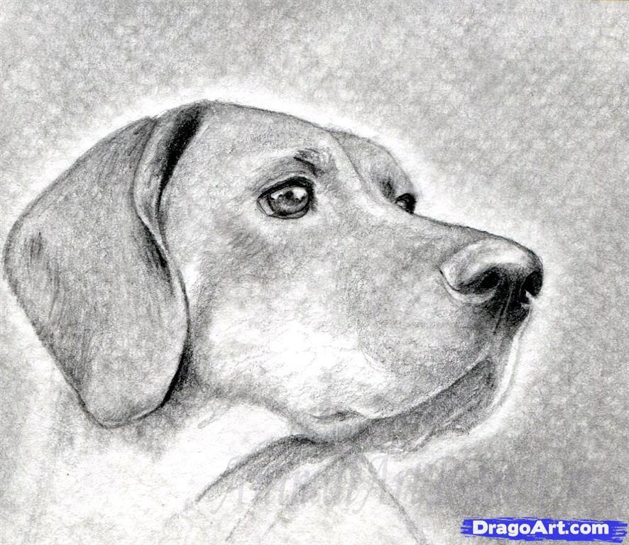 Как правильно нарисовать голову, морду собаки - шаг 9