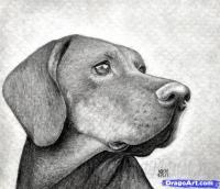 Как правильно нарисовать голову собаки карандашом