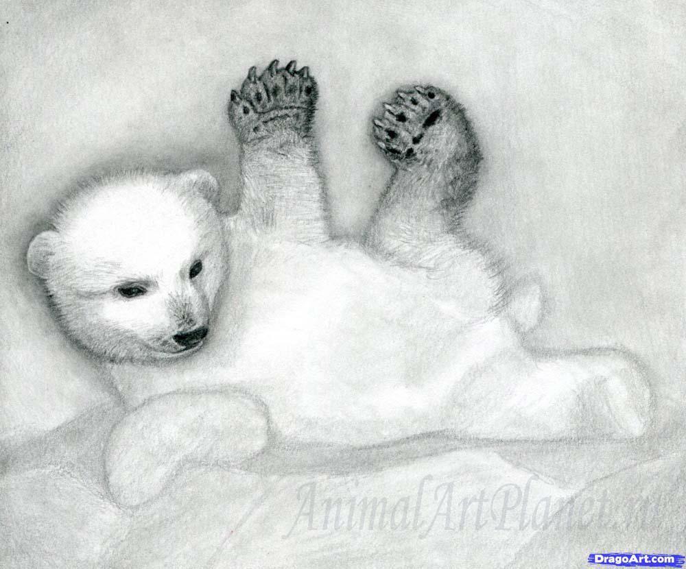 Как правильно нарисовать маленького медвежонка