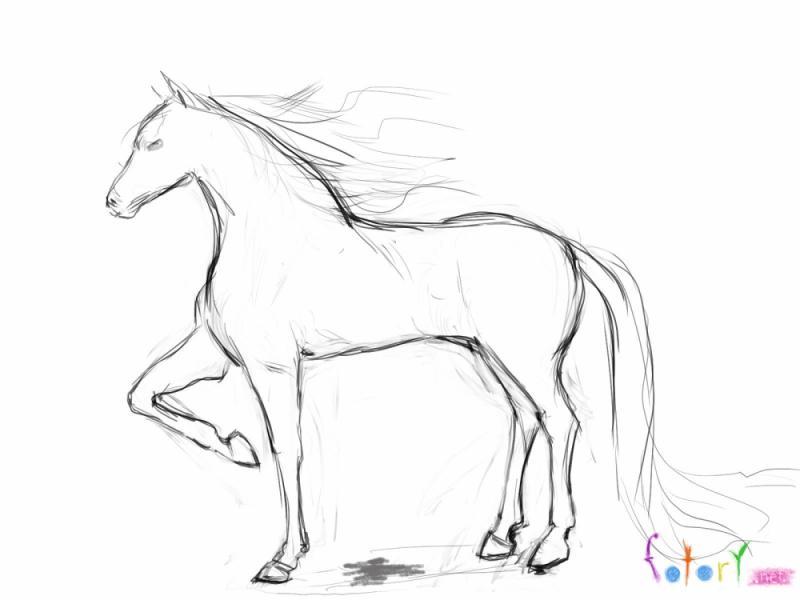 фото рисунки лошади