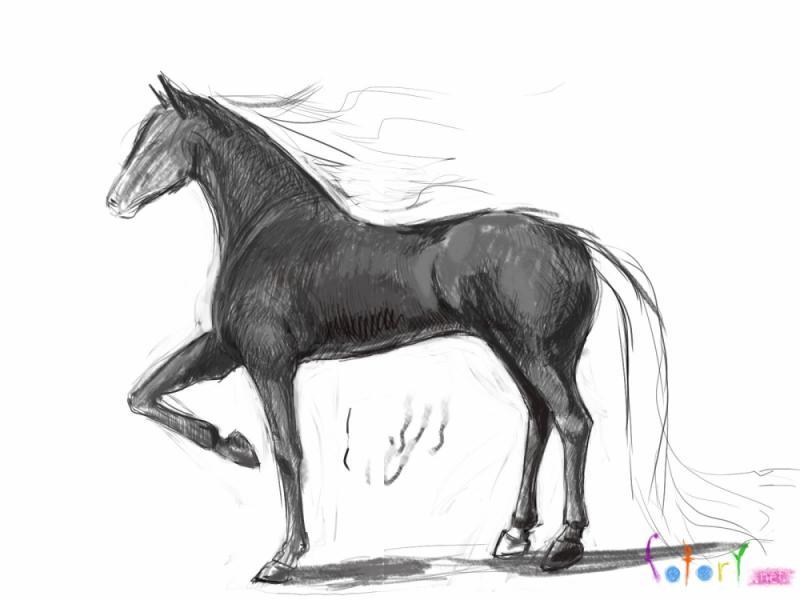 раскраски Лошади раскраска