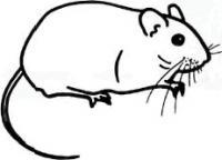 Как просто нарисовать полевую мышку карандашом