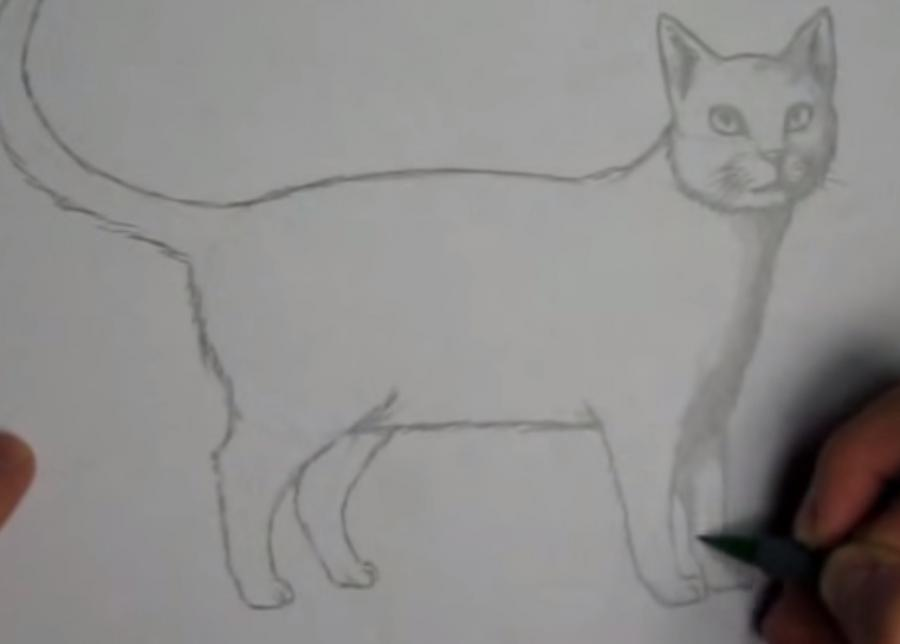 Как шаг за шагом нарисовать кота в полный рост - шаг 5