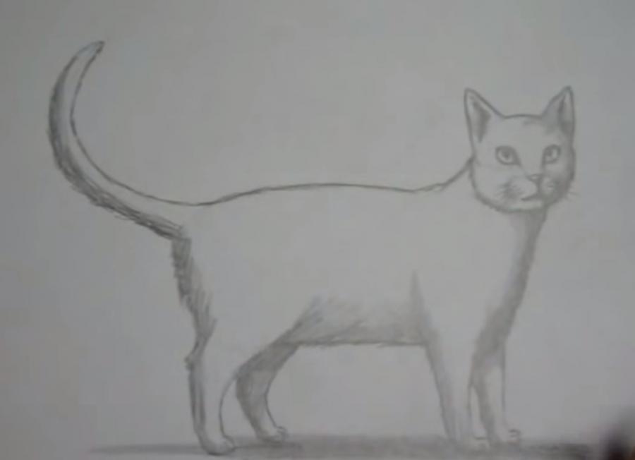 Как шаг за шагом нарисовать кота в полный рост - шаг 6
