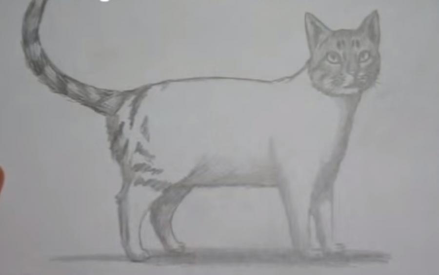 Как шаг за шагом нарисовать кота в полный рост - шаг 7