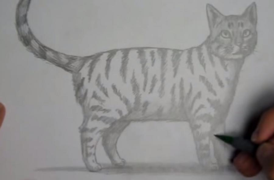 Как шаг за шагом нарисовать кота в полный рост - шаг 8